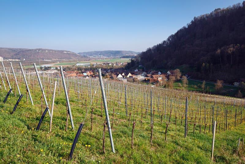 Ansicht des Dorfs von Villigen umgab mit Weinbergen an einem sonnigen Frühlingstag switzerland lizenzfreies stockfoto