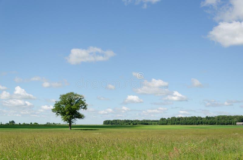 Ansicht des grünen Feldes und des Hintergrundes des blauen Himmels des Baums stockfotografie