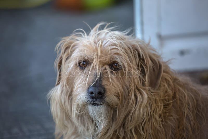 Ansicht des inländischen Hundes ohne eine entschlossene Zucht stockbild