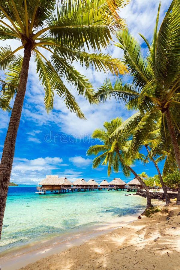 Ansicht des sandigen Strandes mit Palmen, Bora Bora, Französisch-Polynesien vertikal lizenzfreie stockfotografie