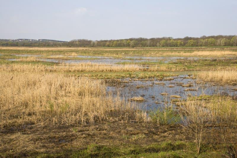 Ansicht des Sumpfes und des Waldes im Hintergrund lizenzfreies stockfoto