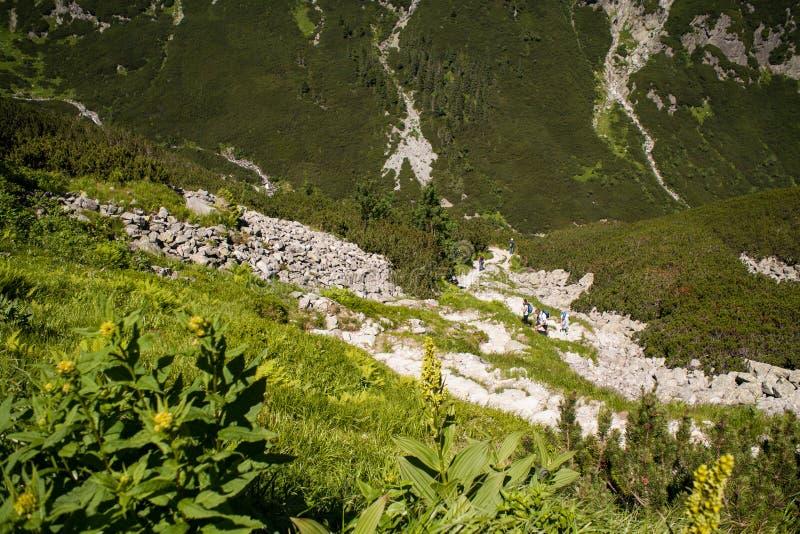Ansicht des Tales von fünf Teichen, tatra Berge lizenzfreies stockbild