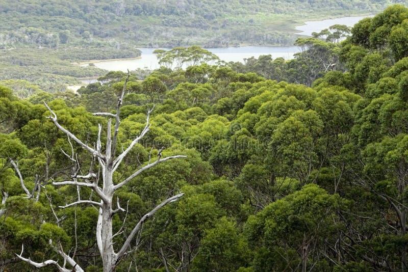 Ansicht des Walpole-Flusses West-Australien im Herbst lizenzfreie stockbilder