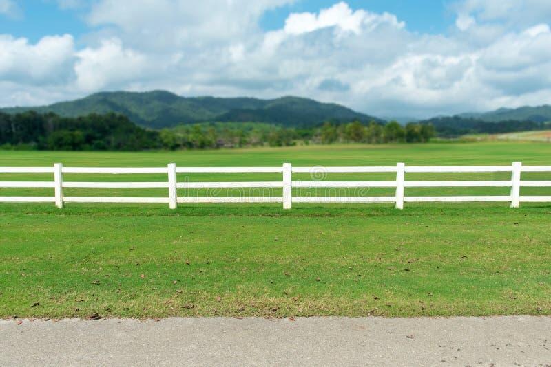 Ansicht des weißen Zauns auf Grasgarten stockbild