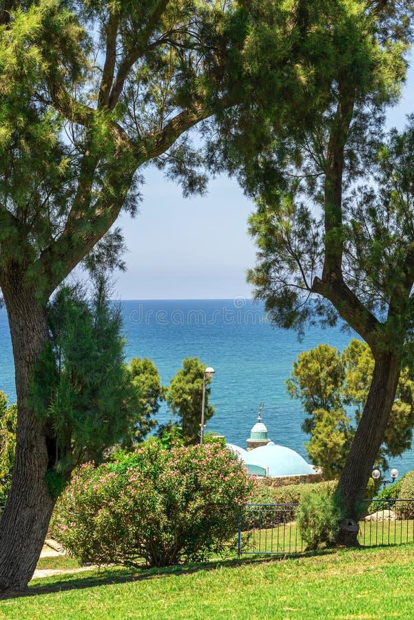 Ansicht durch die Kiefer und die Sträuche auf dem Türkismeer von Tel Aviv in Israel im Sommer lizenzfreie stockfotos