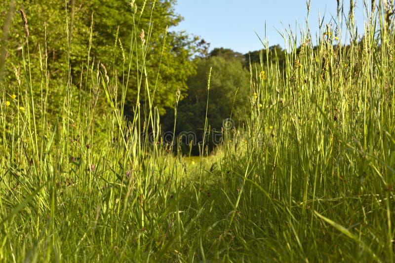 Ansicht durch Gras von der Unterseite stockbild