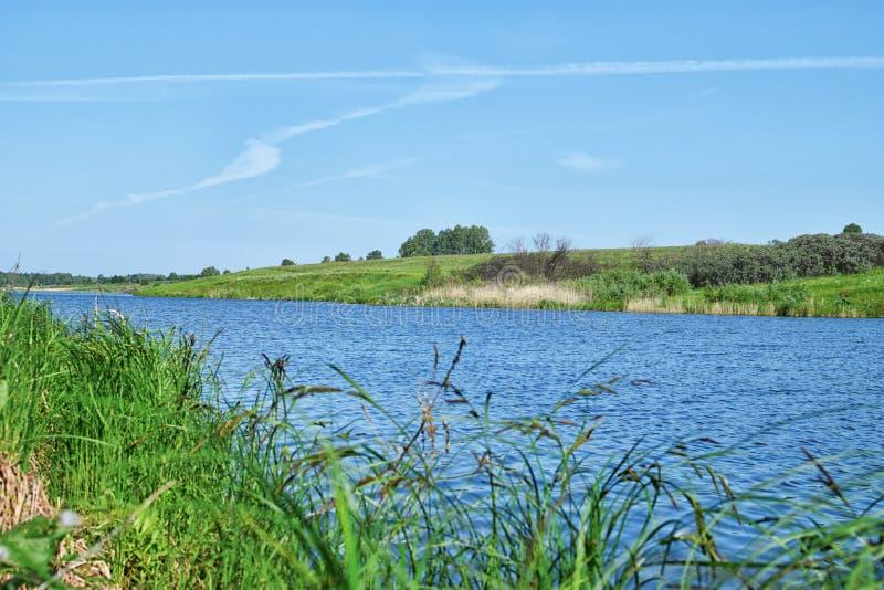 Ansicht durch Schilfe nahe Fluss und grüner Wiese mit klarem Himmel am Sommer lizenzfreies stockfoto