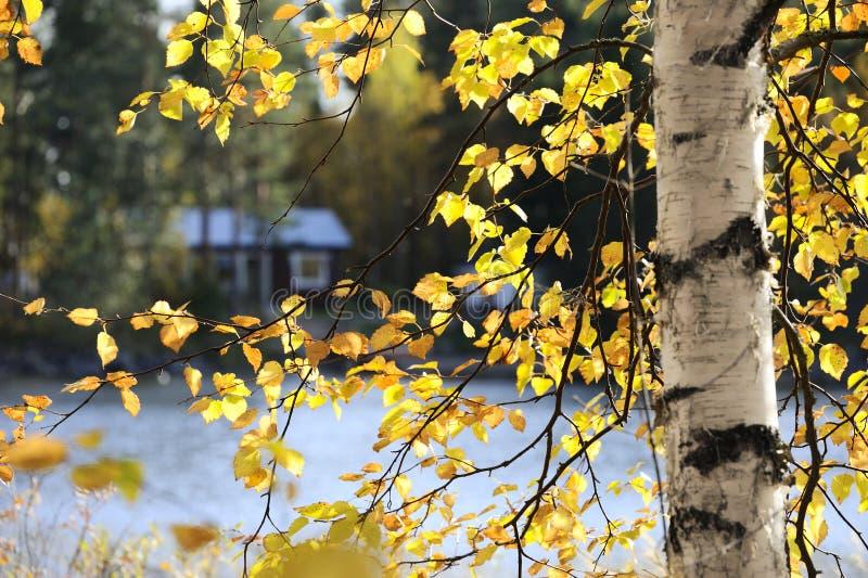 Ansicht durch Zweig des Birkenbaums im Herbst stockfotografie