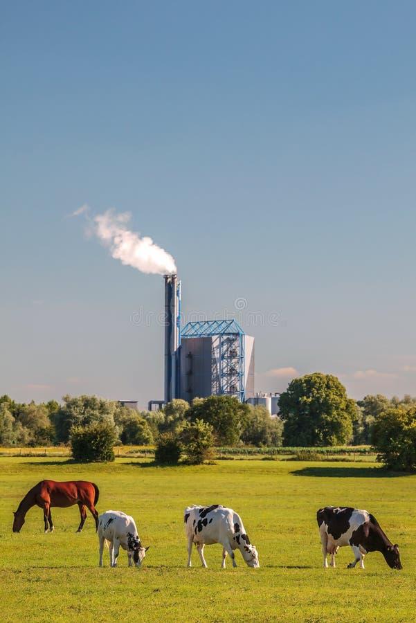 Ansicht an einer niederländischen Müllverbrennungsanlage mit Kühen und Pferd in Front I lizenzfreie stockfotos
