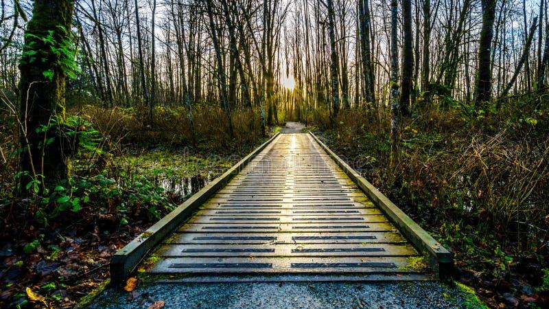 Ansicht einer Wegbrücke auf Brea Island, Britisch-Columbia, Kanada stockfotos