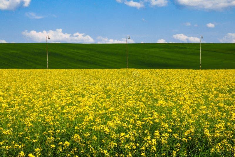 Ansicht eines gelben Rapssamenfeldes, der grünen Hügel und des blauen Himmels mit weißen Wolken lizenzfreies stockbild