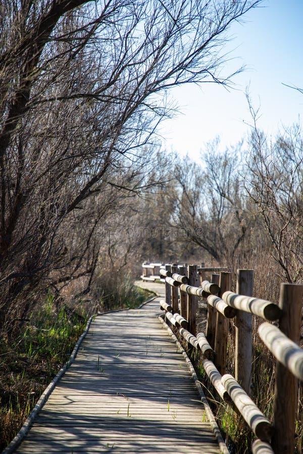 Ansicht eines hölzernen Weges und des Zauns mit kahlen Bäumen lizenzfreies stockbild