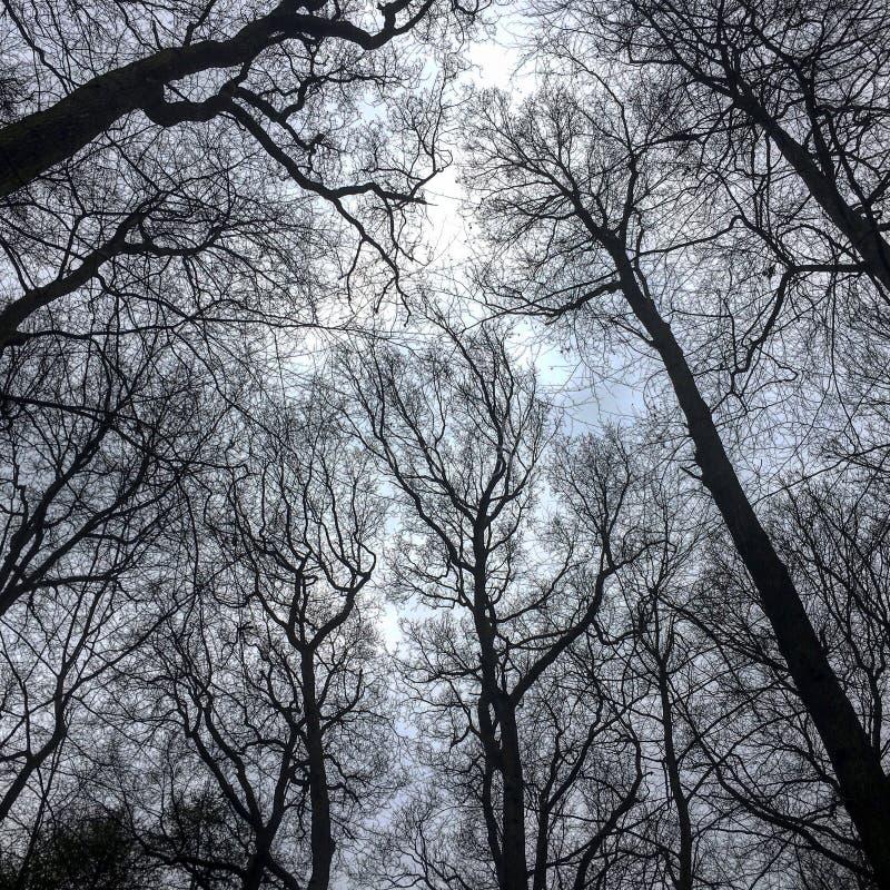 Ansicht eines schönen Baums lizenzfreie stockfotografie