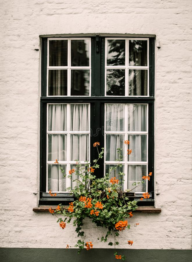 Ansicht am Fenster mit Blume im alten Haus stockbild