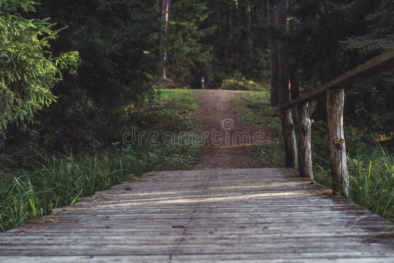 Ansicht Forest Roads, Überschrift tiefer im Wald auf Sunny Summer Day, teils unscharfes Bild mit freiem Raum für Text stockbilder