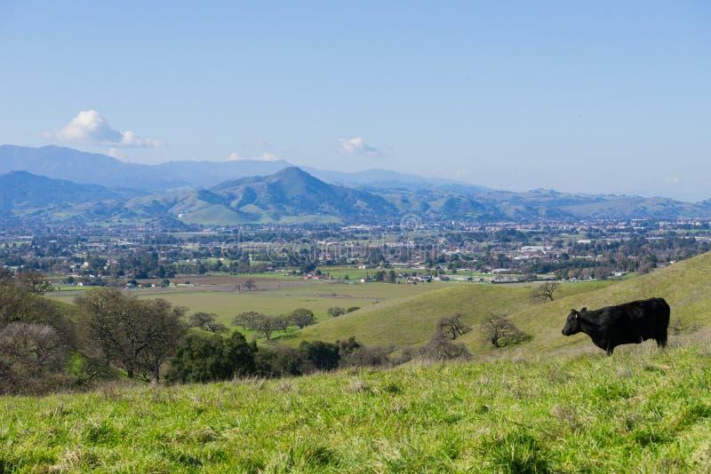 Ansicht in Richtung zu Morgan Hill vom Coyote See - Harvey Bear Park, Kalifornien lizenzfreie stockbilder