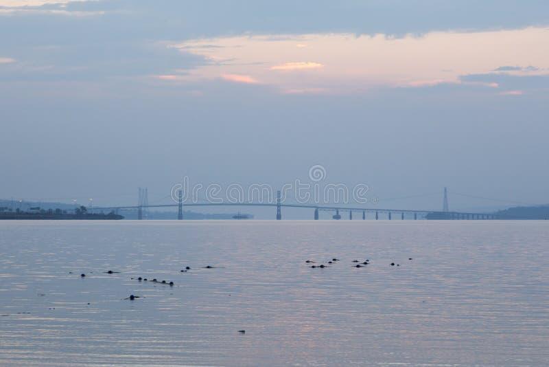 Ansicht vom Beauport-Strand auf Bojen im St. Lawrence River und die Insel von Orleans-Brücke bei Sonnenaufgang lizenzfreies stockfoto