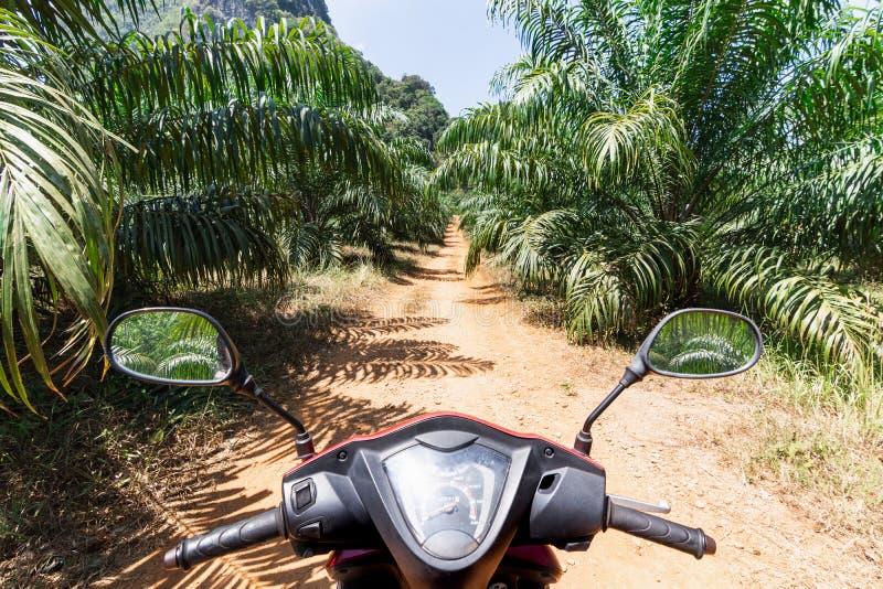 Ansicht vom Rollerfahrersitz über der Dschungelstraße in Krabi-Provinz, Thailand lizenzfreie stockbilder