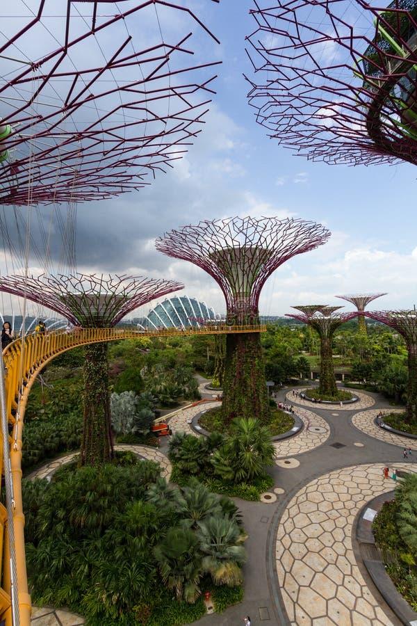 Ansicht vom Supertree Grove vom skyway an den Gärten durch die Bucht, Singapur stockfoto