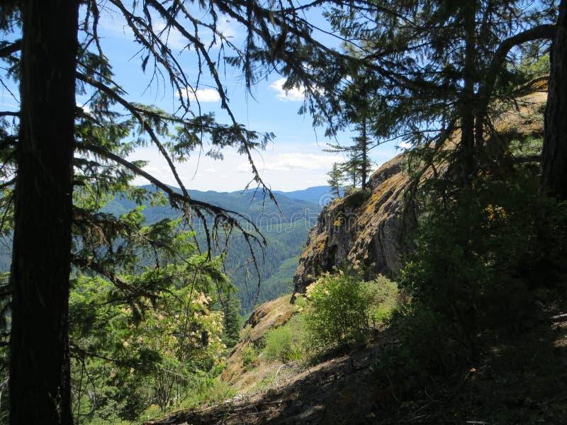Ansicht vom Wald stockbilder