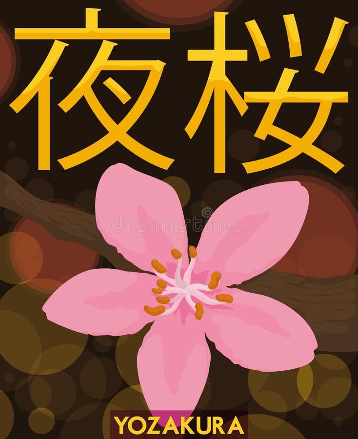 Ansicht von Cherry Flower in Hanami-Nacht oder in Yozakura, Vektor-Illustration vektor abbildung