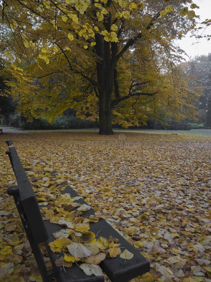 Ansicht von der Bank auf der Herbstparkgasse bedeckt mit gefallen lizenzfreies stockfoto