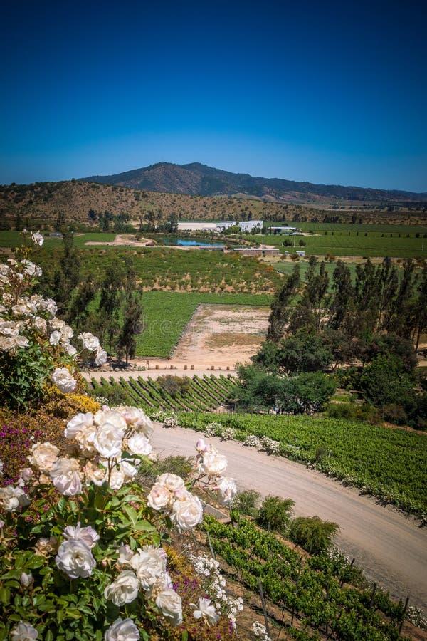 Ansicht von der Weinkellerei mit den Rosen, Casablanca, Chile lizenzfreie stockfotos