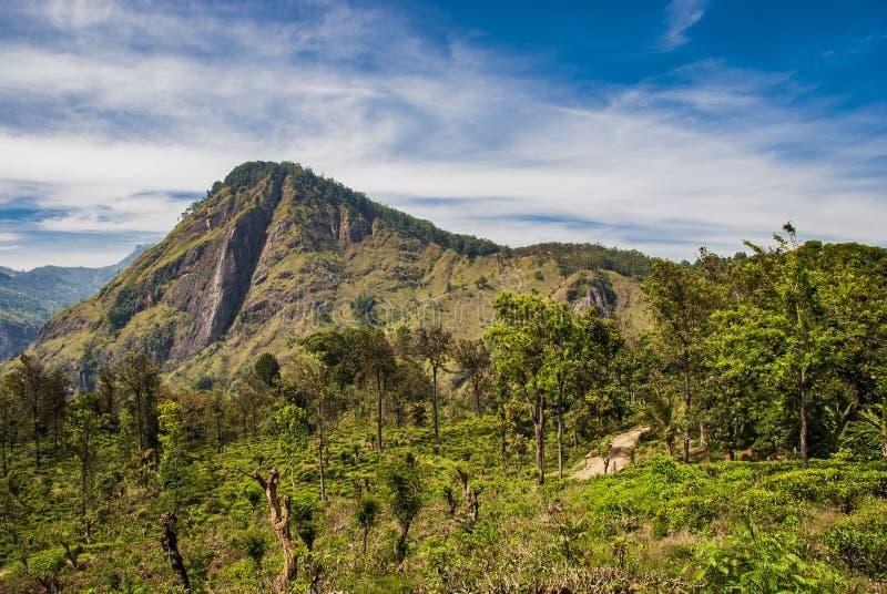Ansicht von kleiner Adams-Spitze in Ella in Sri Lanka stockfotos