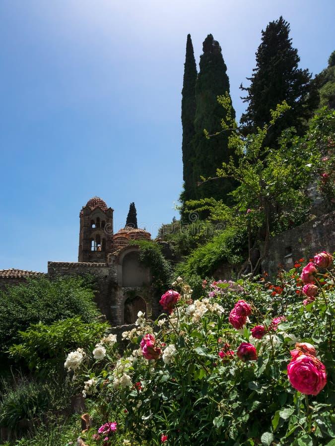Ansicht von Pantanassa-Kloster, Mystras, Griechenland, in den Rosenbusch und in den Zypressenbäumen stockfotografie