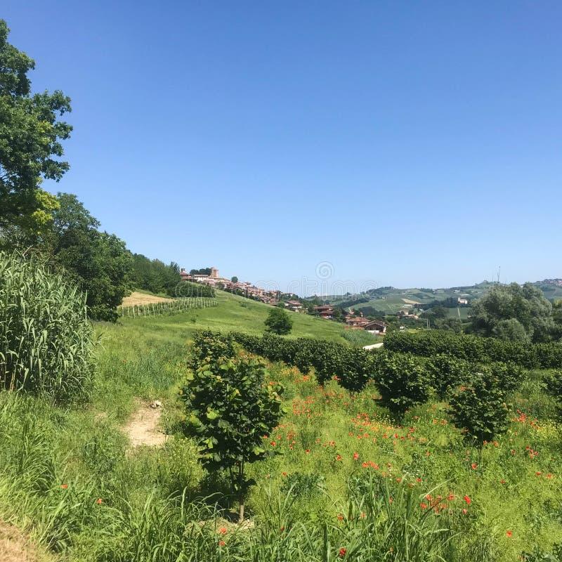 Ansicht von Roddi, ein Dorf in den Langhe-Hügeln, Piemont - Italien lizenzfreie stockbilder