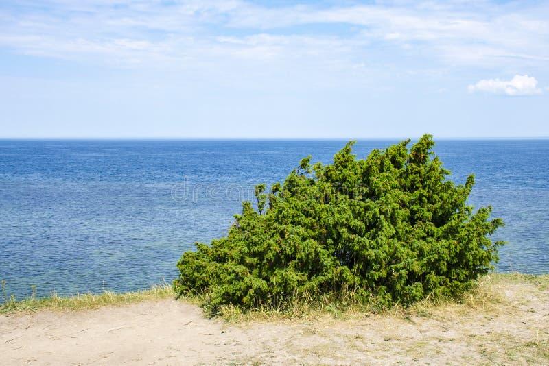 Ansicht von schönem sehen Landschaft in Saaremaa, Estland lizenzfreie stockfotos