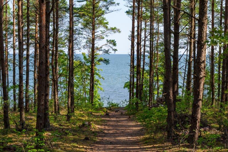 Ansicht von schönem sehen Landschaft in Saaremaa, Estland lizenzfreie stockbilder