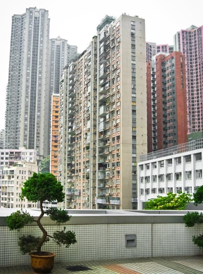 Skycrapers in Hong Kong mit Bonsais stockfoto