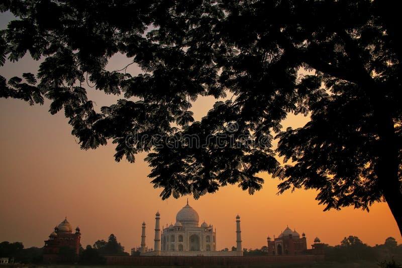 Ansicht von Taj Mahal gestaltete durch eine Baumkrone bei Sonnenuntergang, Agra, Uttar lizenzfreie stockfotos