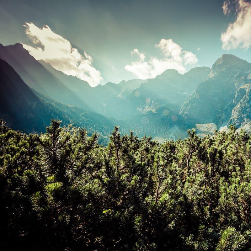 Ansicht von Tatra-Bergen vom Wanderweg polen europa lizenzfreie stockfotos