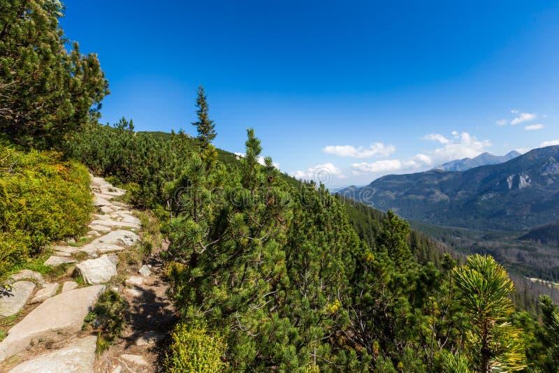 Ansicht von Tatra-Bergen vom Wanderweg polen europa lizenzfreies stockfoto