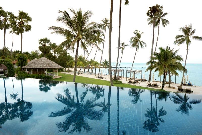 Ansicht von tropischen Palmen vom Poolerholungsort lizenzfreie stockfotografie