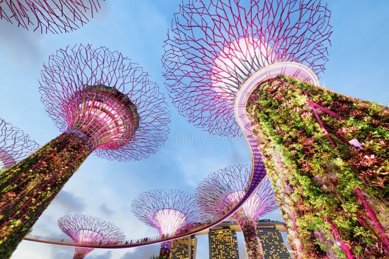 Ansicht von unten des Supertree Grove mit dem Skyway, Singapur lizenzfreie stockbilder