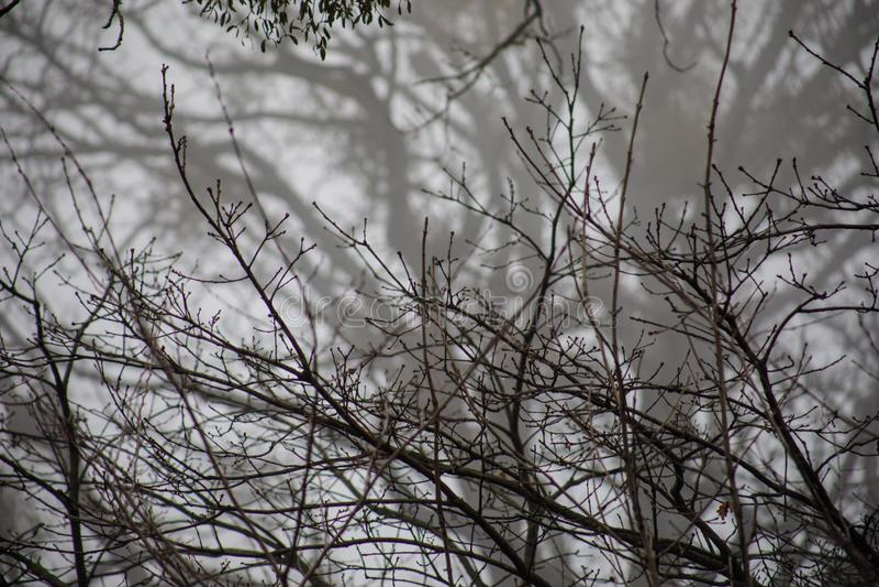 Ansicht von unten von hohen alten Bäumen im Winterwaldblauen Himmel im Hintergrund azerbaijan stockfotografie