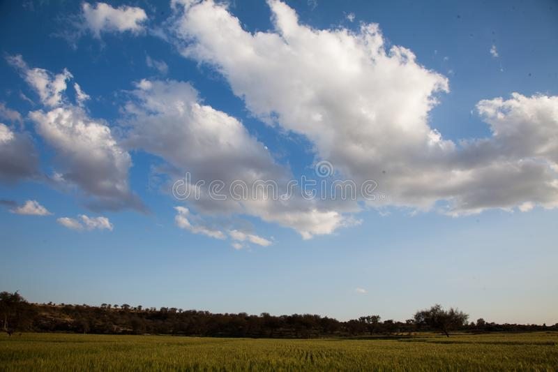 Ansicht von Weizenfeldern und -wolken stockbilder