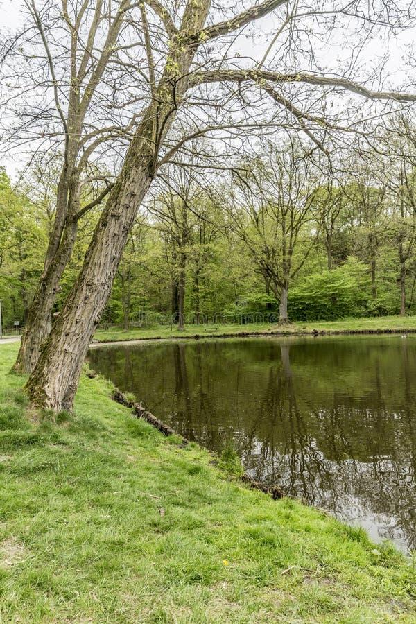 Ansicht von zwei Bäumen geneigt in Richtung zum See stockfoto