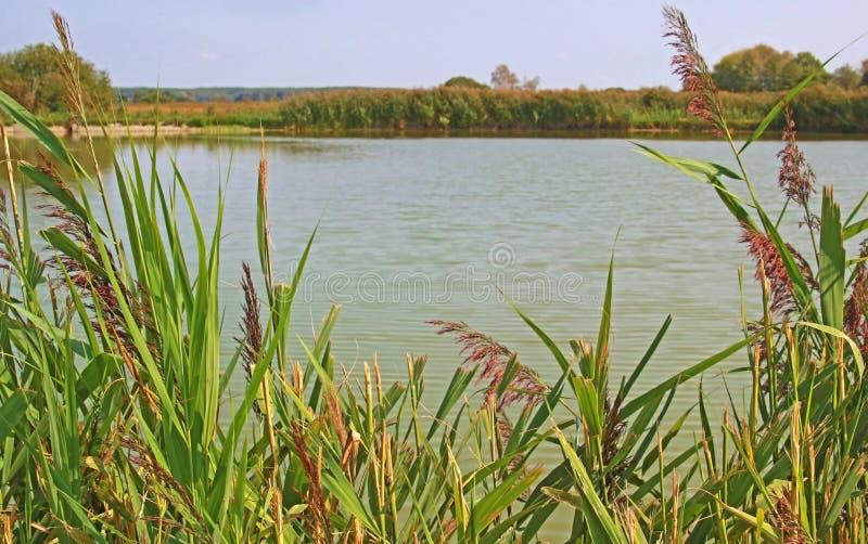 Ansicht zu einem Teich gestaltet durch Reedgras lizenzfreie stockfotografie