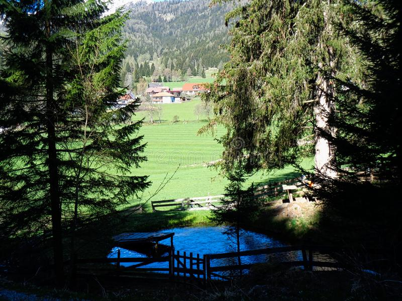 Ansicht zu einer Sommerweide in den Alpen in ?sterreich lizenzfreie stockbilder