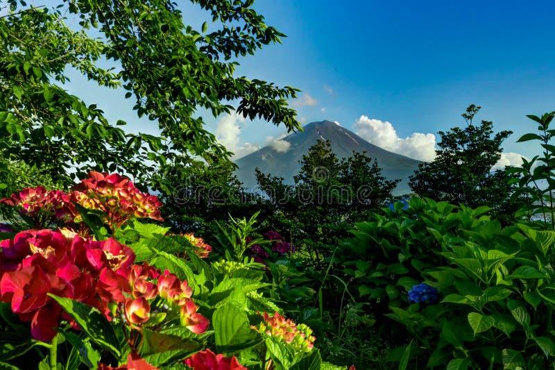 Ansicht zum Fujisan mit Blumen im Sommer mit blauem Himmel und clou stockfotos