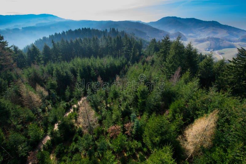 Ansicht zum schwarzen Wald nahe Oberkirch stockbilder