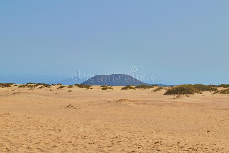 Ansichten der goldenen Dünen von Corralejo mit Vegetation in Fuerteventura stockbilder