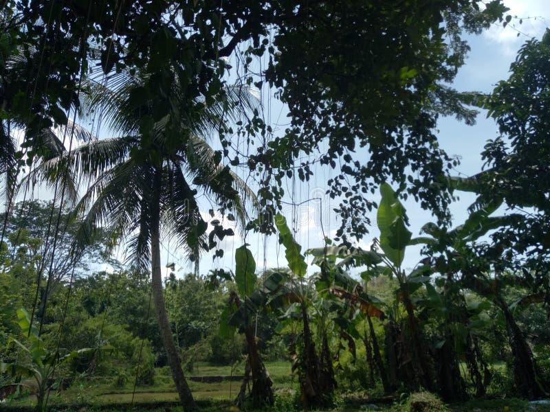 Ansichten des Dorfs lizenzfreie stockbilder