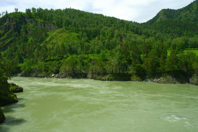 Ansichten des Gebirgsflusses im Sommer, die im Grün untergetaucht werden stockbilder
