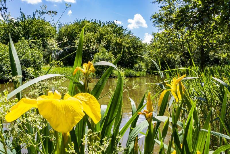 Ansichten eines typischen niederländischen Parks stockbild