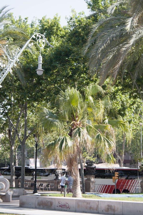 Ansichten von Barcelona Natur und Elemente gemacht vom Menschen stockfoto